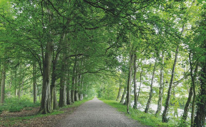 Berumerfehner Forst